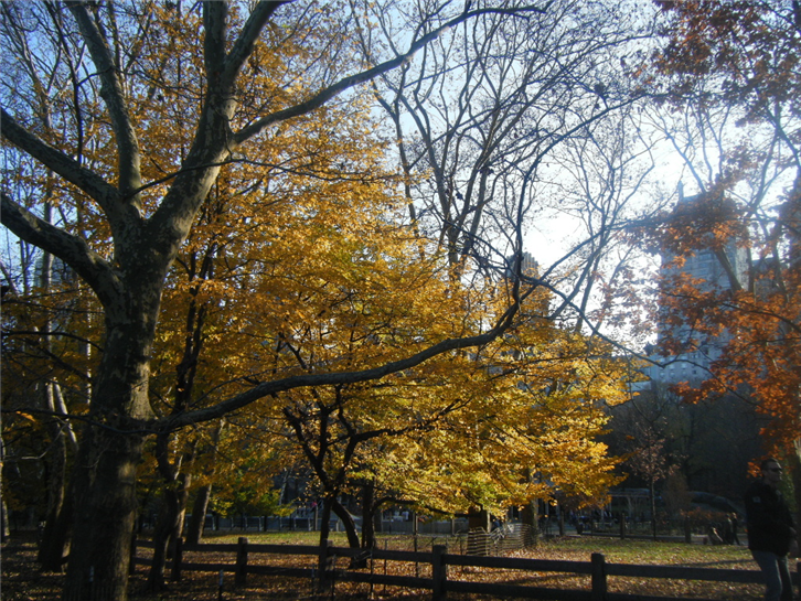 new-york 1024 autumn trees-crop-v2.JPG